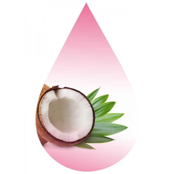 Palm Coconut-MB