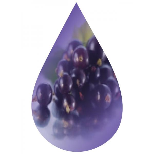 Black Currant-FW